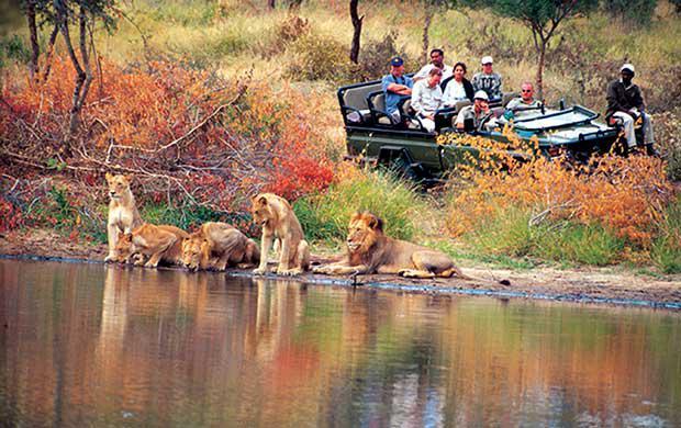 Thornybush Game Reserve, Limpopo