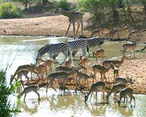 Umhlametsi Game Reserve, Limpopo